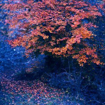 Alimestan Forest - Iran © Ali Alavi
